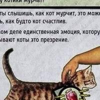 Почему урчат кошки