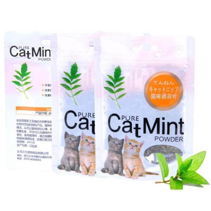 Кошачья мята: для чего нужна эта трава для кошек