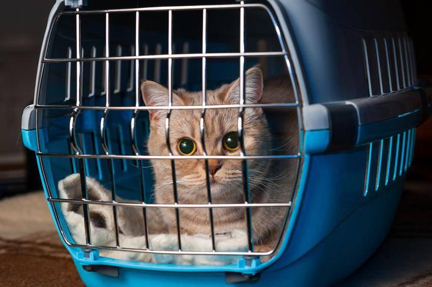 Как перевозить животных в самолёте: подробная инструкция - лайфхакер