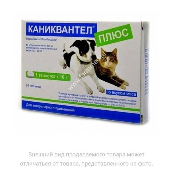Каниквантел для кошек: инструкция по применению, отзывы