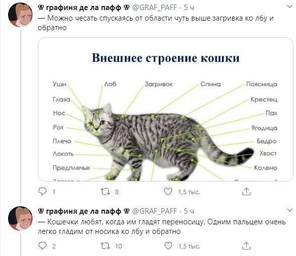 Где можно гладить кошку. приятно ли кошке, когда её гладят? кошка легла на спину и ведет себя ласково