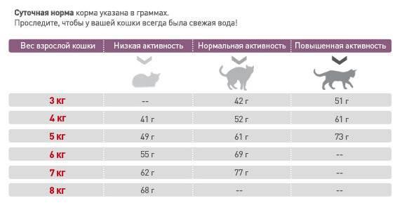 Сколько раз в день кормить кота и кошку