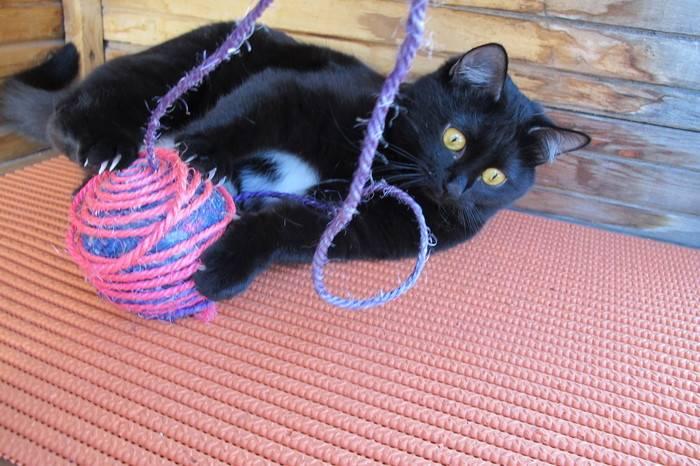 Черный кот в доме – 7 примет про них