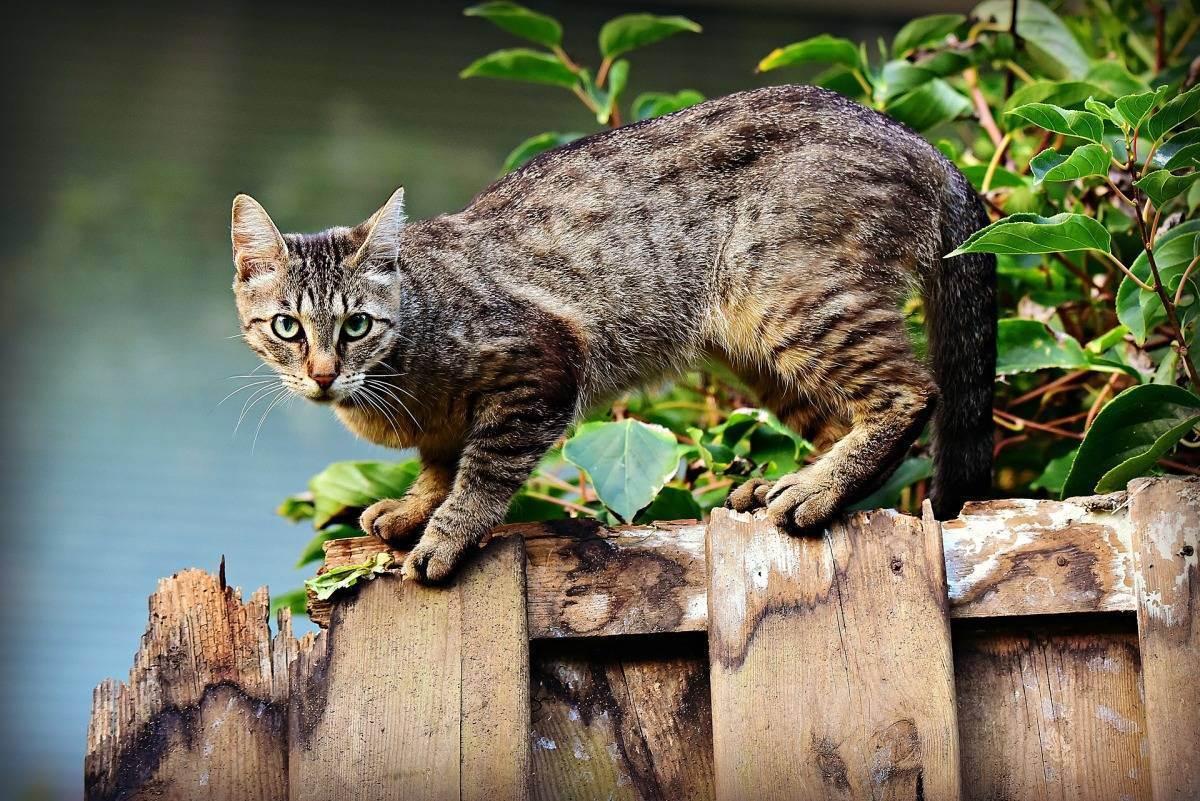 Кот садится на попу и едет. почему кошка ездит на попе. осложнение родовой деятельности