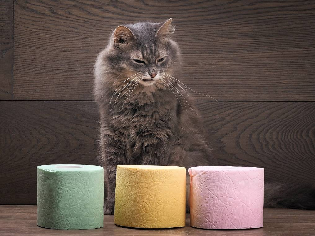 Лечение диареи у кошек - муркин дом