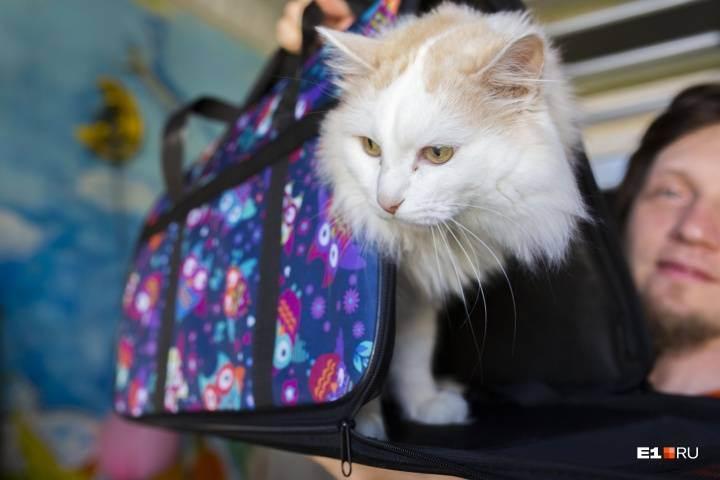 Международный ветеринарный паспорт для кошек, как получить ветеринарный паспорт, оформление и заполнение ветеринарного паспорта международного образца для кошек | кошки - кто они?