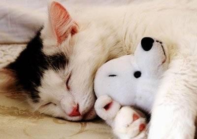 К чему увидеть кошку во сне?