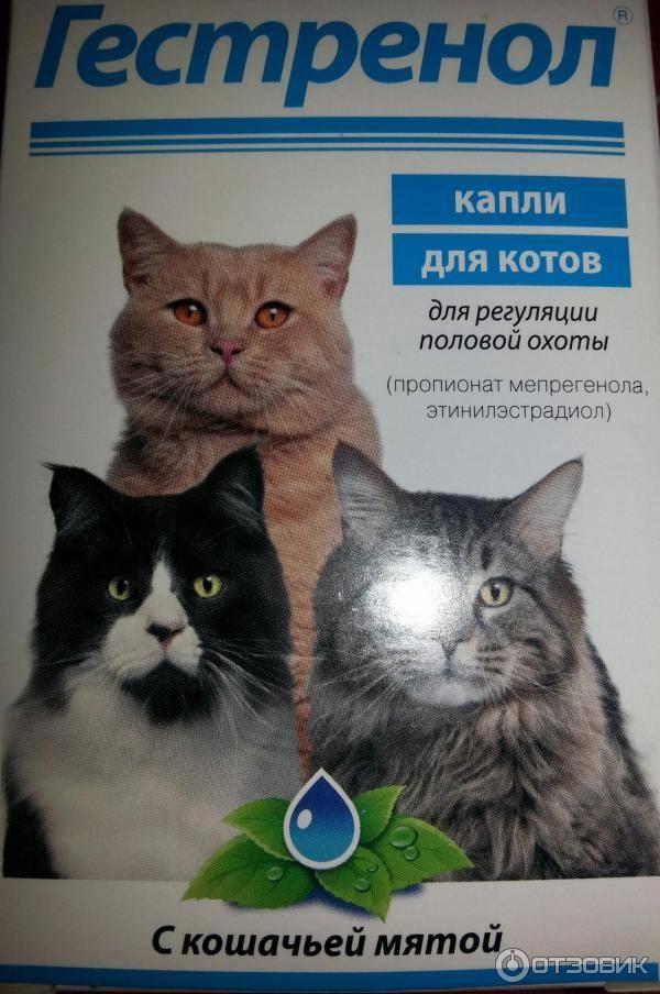 8 эффективных таблеток и капель для кошек от гуляния