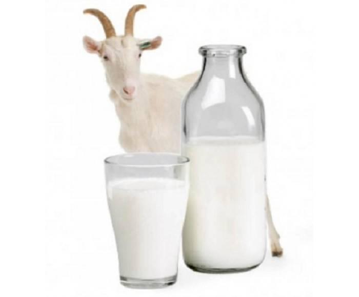 Можно ли давать котятам молоко – коровье, козье – натуральное или магазинное?