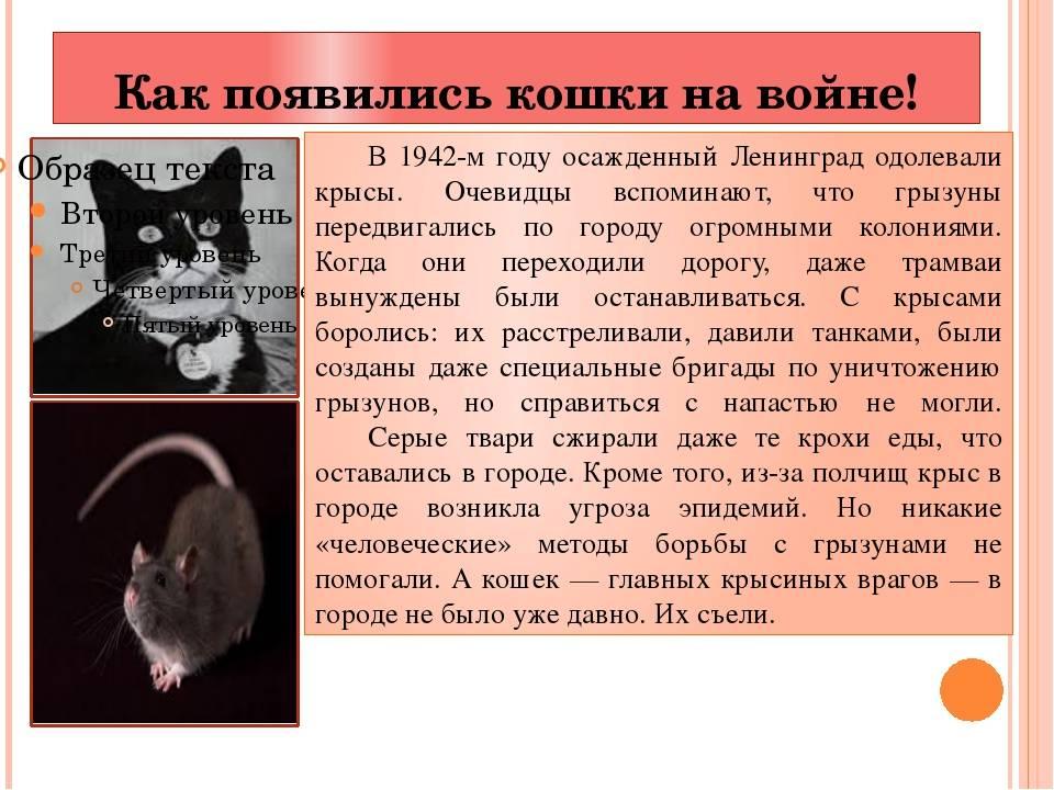 Как кошки появились на руси? какое место они заняли в нашей жизни и культуре?