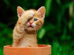Как назвать рыжего кота?