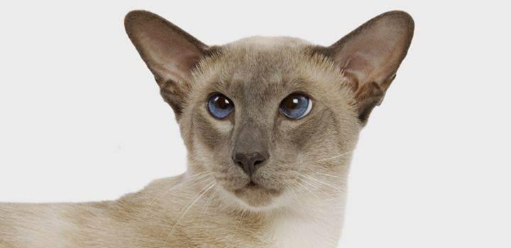 Почему пропадают кошки - потерялась кошка, как найти потерявшуюся кошку, что делать если пропала кошка - всё о кошках и котах
