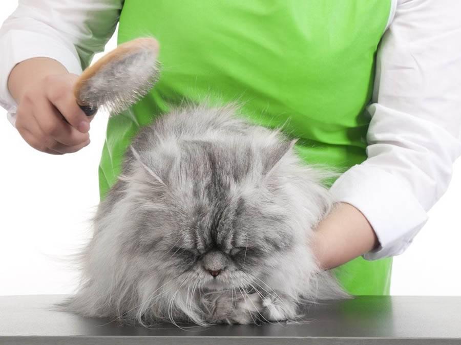 Тусклая шерсть у кошки: причины и средства решения проблемы   royal groom
