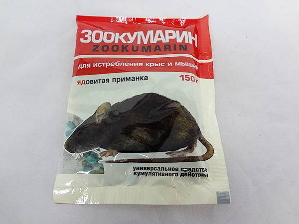 Крысиный яд: смертельная доза для человека, симптомы, последствия