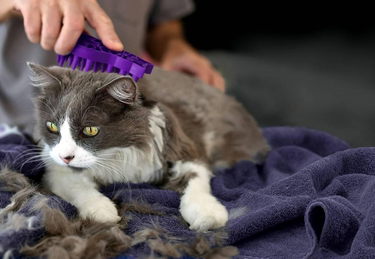 Кот сильно линяет - причины и способы борьбы