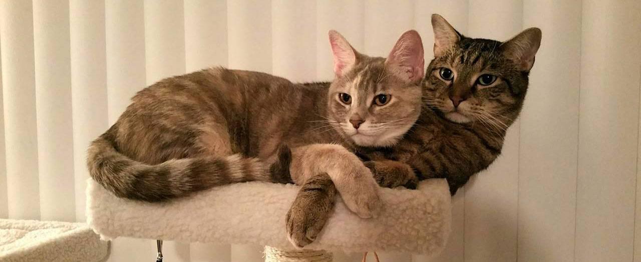 Почему кошка после родов мяукает и ходит за хозяином