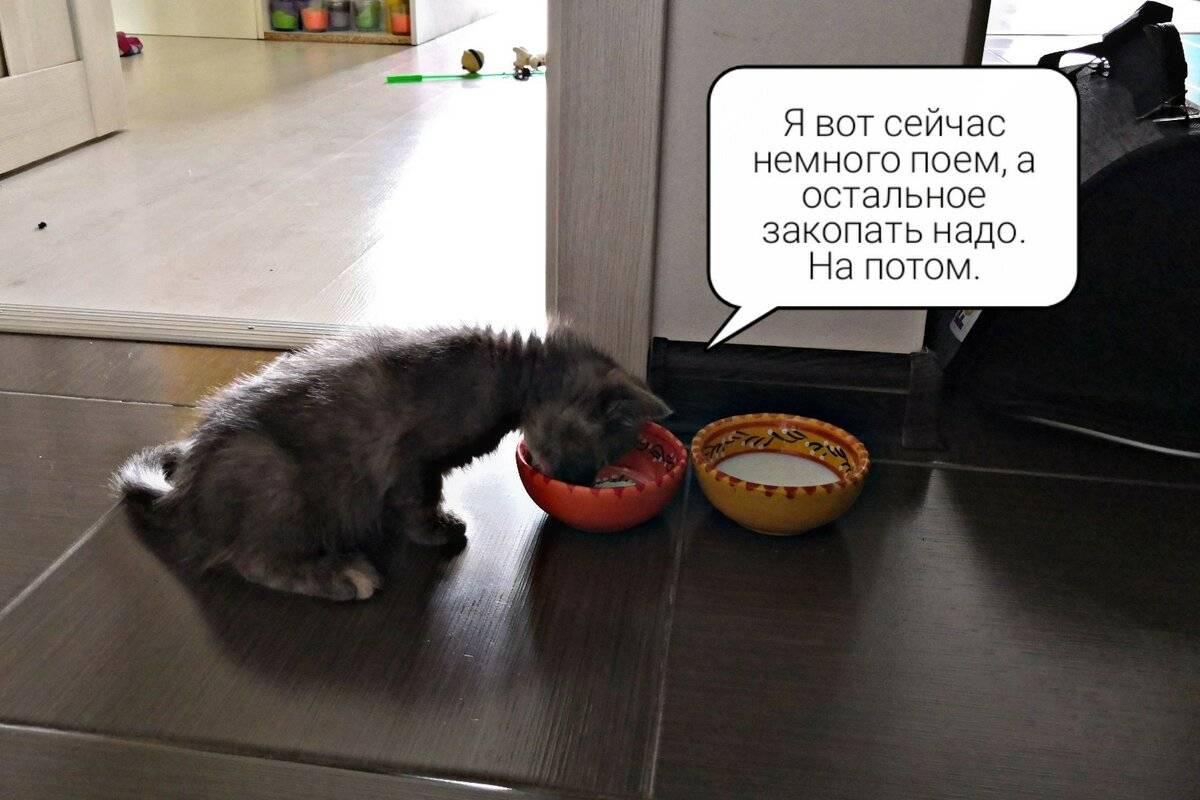 Почему котенок закапывает рядом с миской - почему кошка роет(копает лапой) около мисочек с едой и водой | здоровые рецепты счастливой жизни