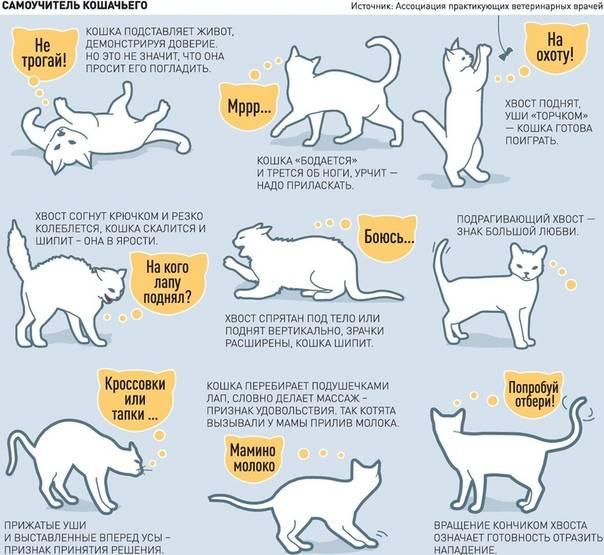Вязка кошек: когда лучше вязать кошку, подготовка, образец договора