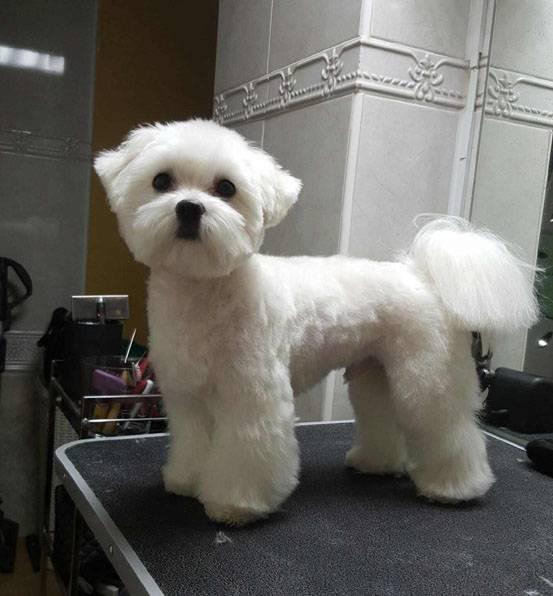 Уход за шерстью собаки: тримминг, стрижка, косметика и другие средства