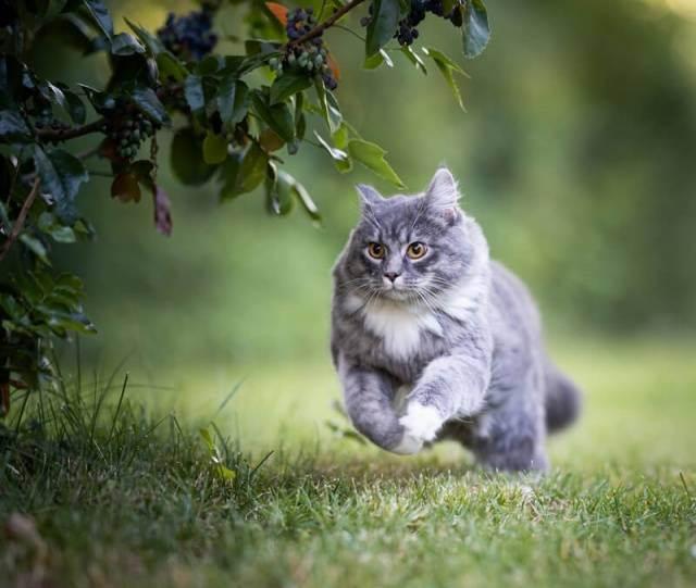 Глисты у кошек и котят | лечение (лекарства), симптомы, виды, профилактика