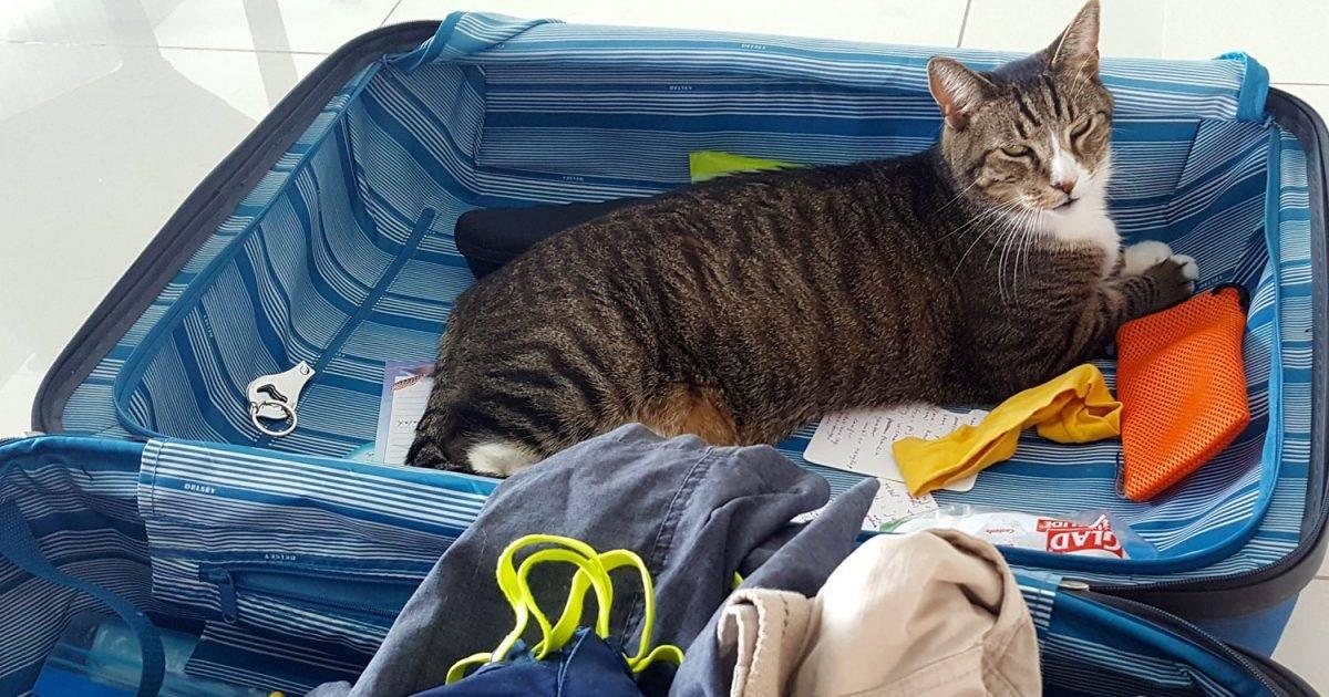 Кошачье здоровье | кошки, коты и котята - мышек нет!