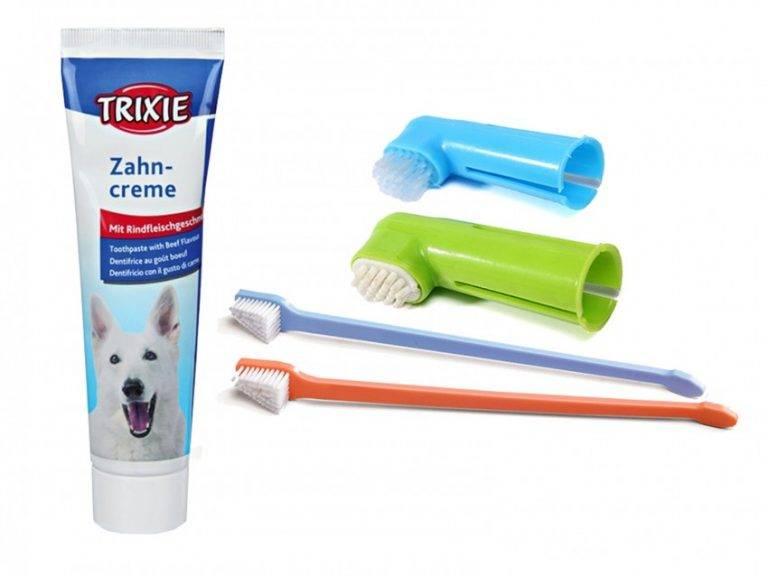 Правильная чистка зубов кошки и котенка