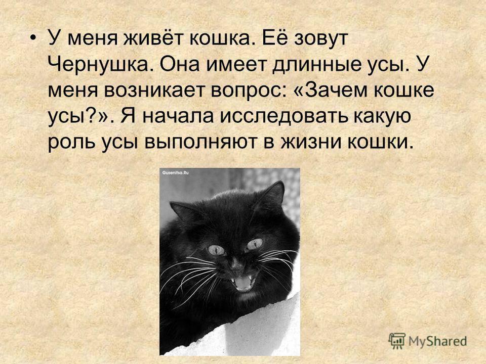 Зачем кошкам и котам нужны усы, почему их нельзя стричь и что делать, если их подстричь?
