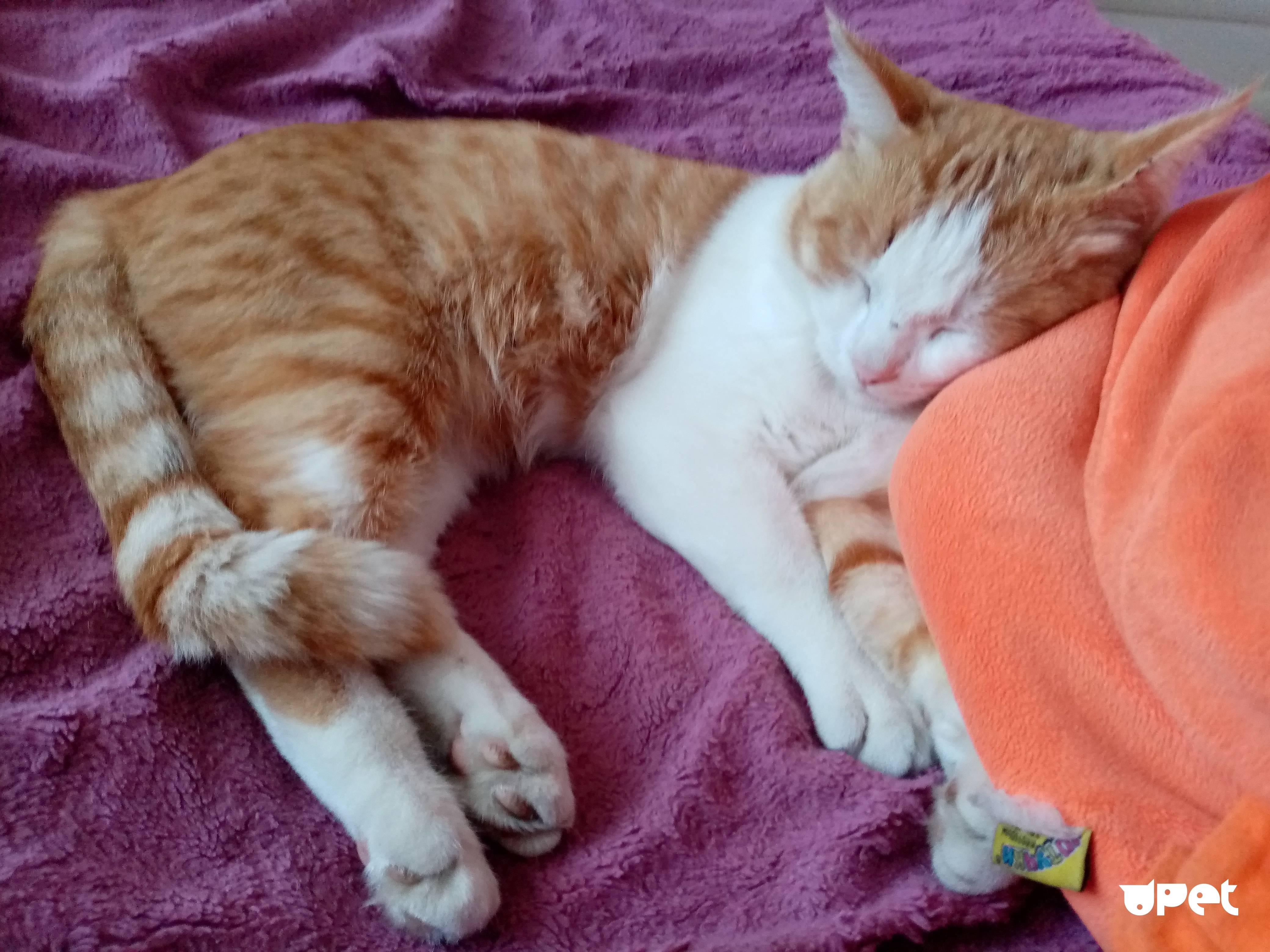 Почему кот дрожит когда лежит, как будто ему холодно и он мёрзнет