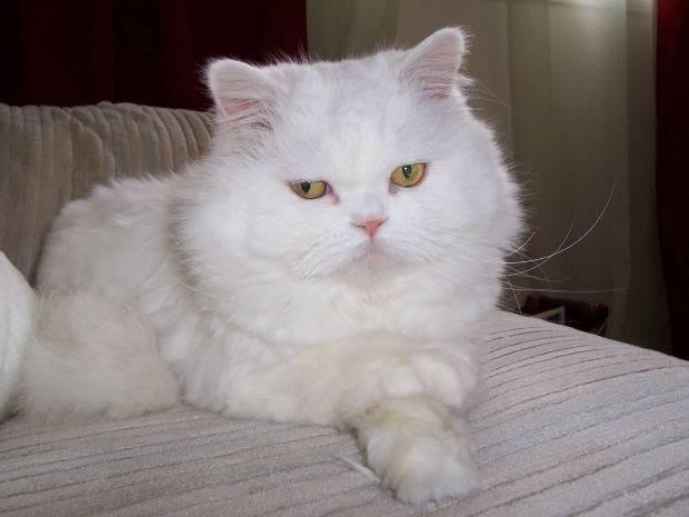 Как понять, что котенок или взрослая кошка заболела, по каким признакам это можно узнать?
