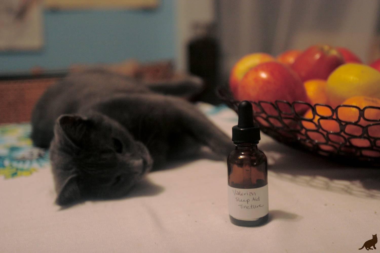 Почему коты любят валерьянку и как она действует на кошек