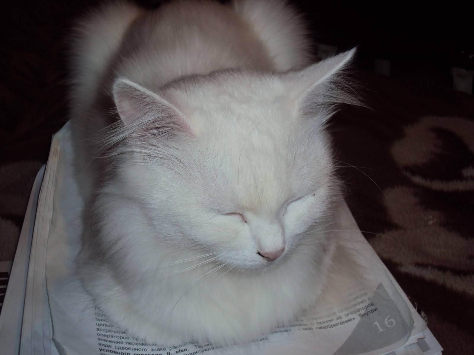 Болезни кошек: обзор
