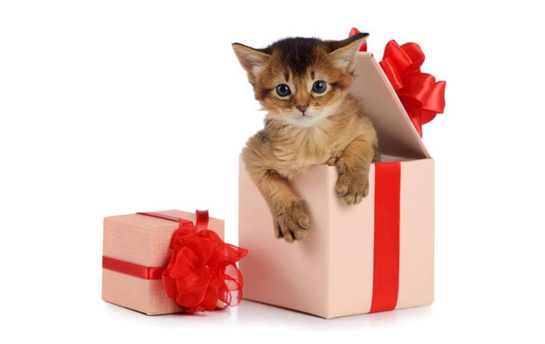 Животное в подарок. - запись пользователя kotenok (kisssa1710) в сообществе домашние животные в категории мошенничество, споры, обсуждение - babyblog.ru