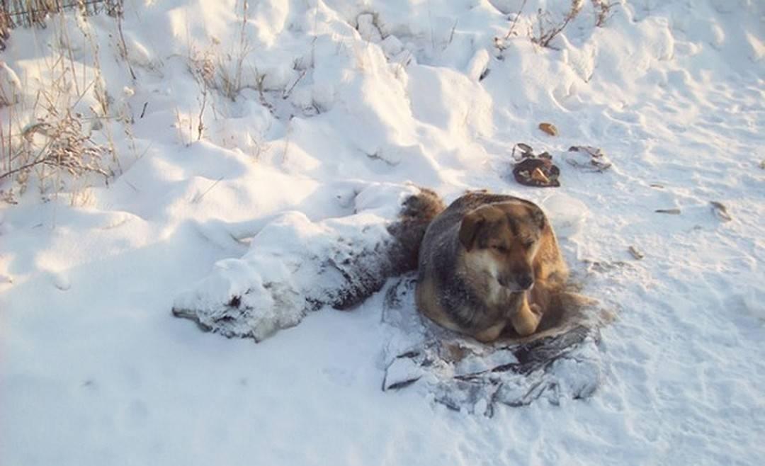 При какой температуре мерзнут кошки? при какой температуре кошки могут жить на улице: какие породы не переносят холода красивые коты зимой.