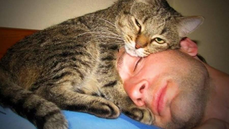 Все приметы и поверья о кошках