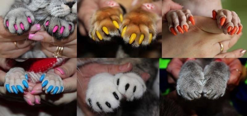 Накладки на когти (антицарапки) для кошек: польза и вред, размеры, как одевать и как снимать