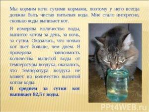 Сколько воды должна пить кошка в сутки и какую воду давать питомцу