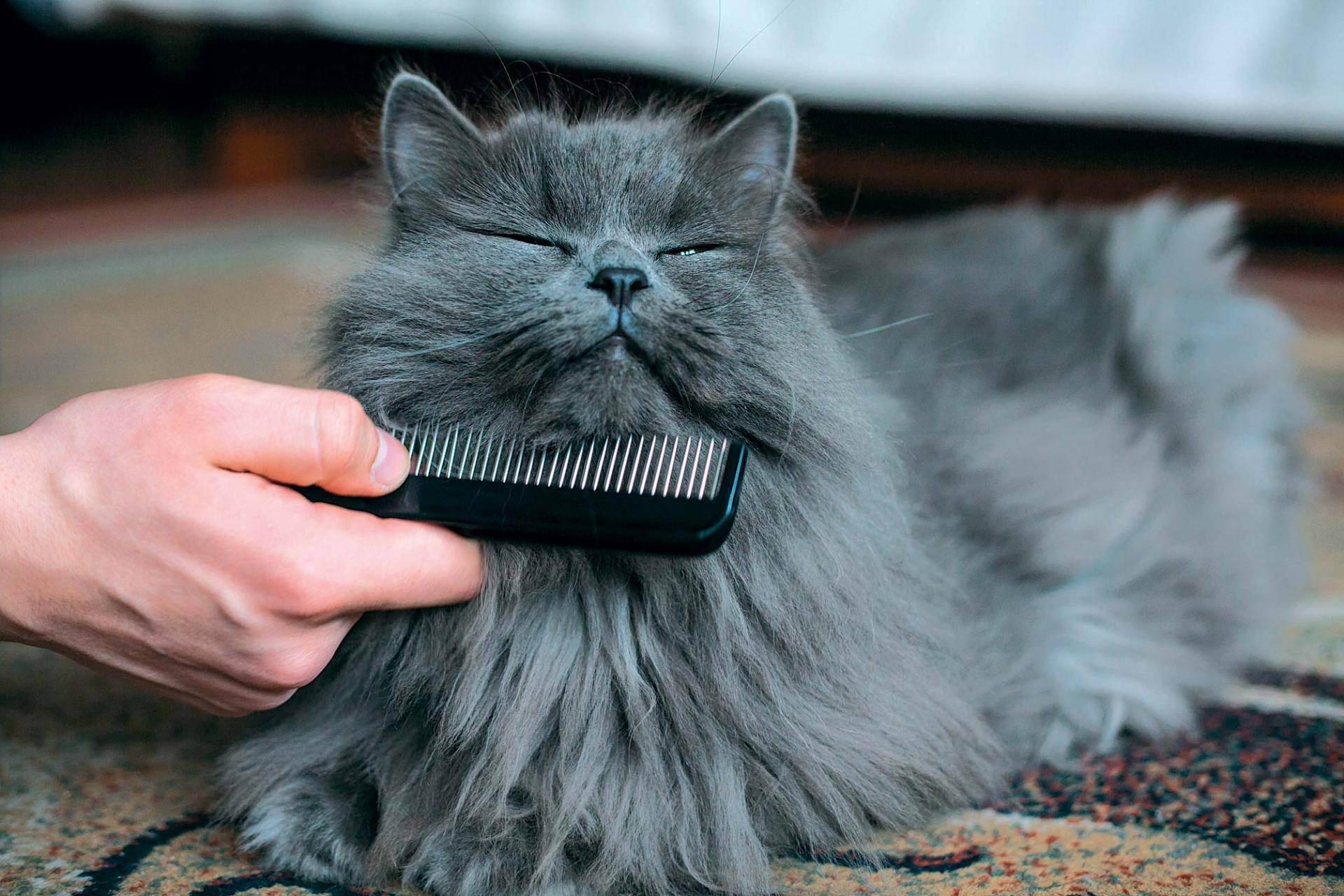 Как ухаживать за котенком: основы кормления и гигиены