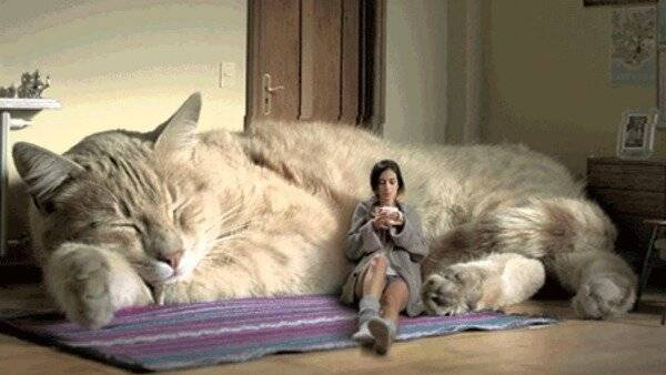 """Исследовательская работа """"люди и кошки""""."""