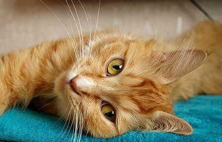 Как понять, что кошка заболела: 7 признаков