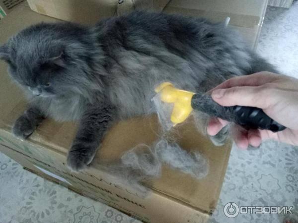 Кошка сильно линяет: что делать, причины, почему у кота выпадает шерсть в домашних условиях