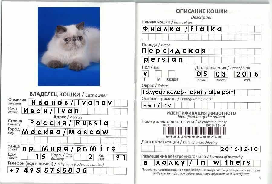 Паспорт для кошки: как сделать международный ветеринарный документ, как он выглядит и сколько стоит?