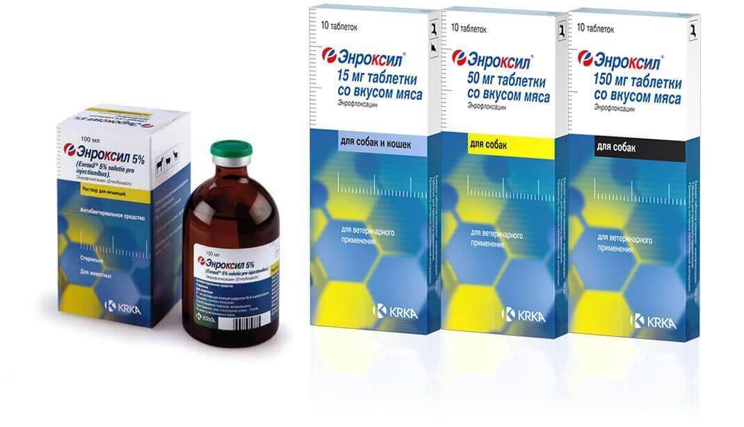 Инструкция по применению энроксила у собак. рассчитайте оптимальную дозу препарата. изучите широту антибактериального эффекта энроксила для собак. улучшите эффективность терапии на 200%