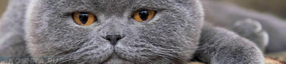 В каком возрасте необходима кастрация котов: минимальный возраст, причины, уход после операции