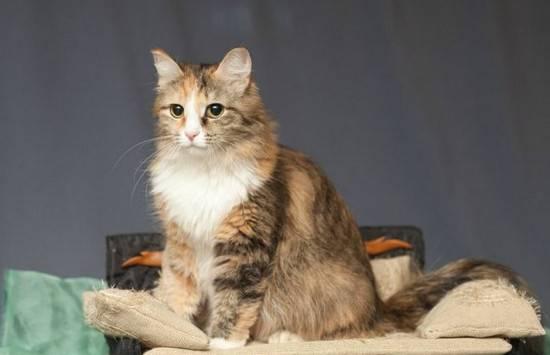 До какого возраста растут коты и кошки, что влияет на темпы роста животных, отзывы ветеринаров и владельцев питомцев