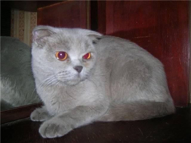 У кошки после еды слезятся глаза: причины, породные особенности, возможные патологии