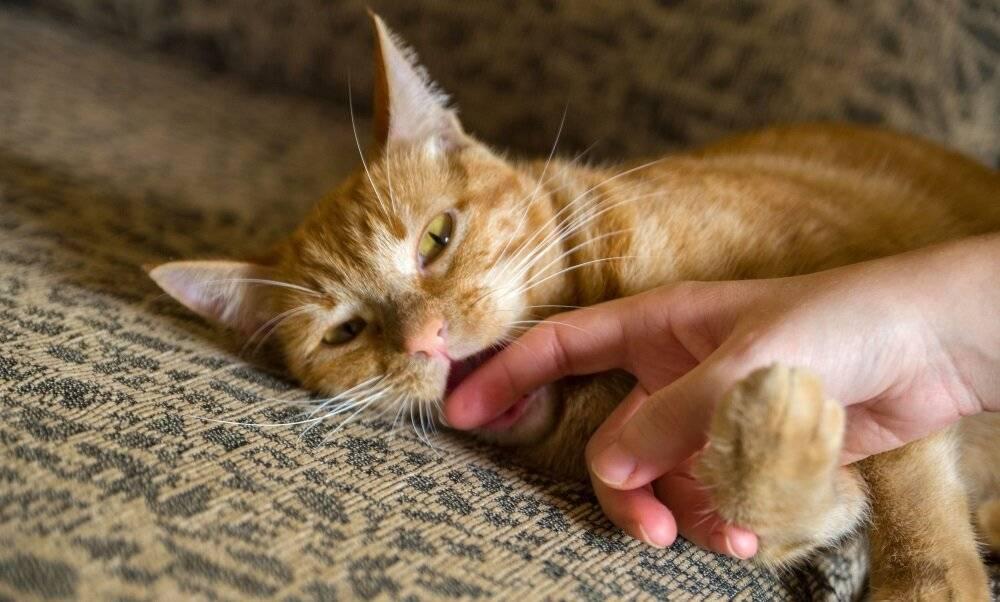 Чем помочь коту и котенку, который страдает от хрипов и тяжелого дыхания