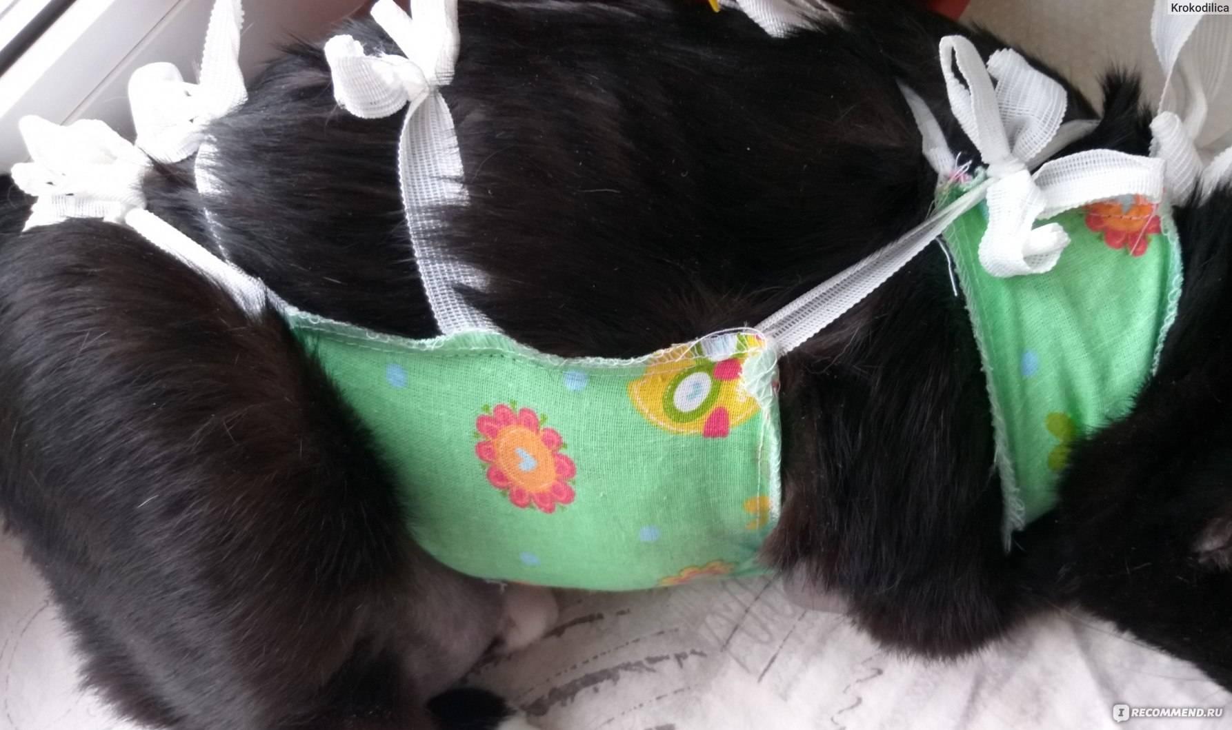 Правила завязывания попоны на кошке после хирургического вмешательства