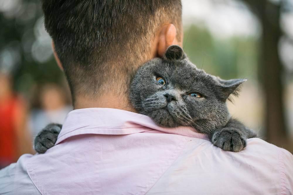 Как кошка проявляет свою любовь к хозяину: 14 главных признаков - досуг - животные на joinfo.com