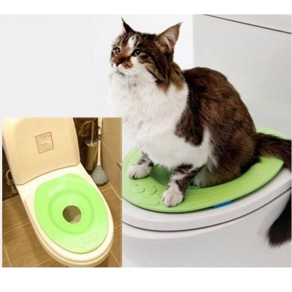 Как приучить кошку к унитазу: инструкция в домашних условиях