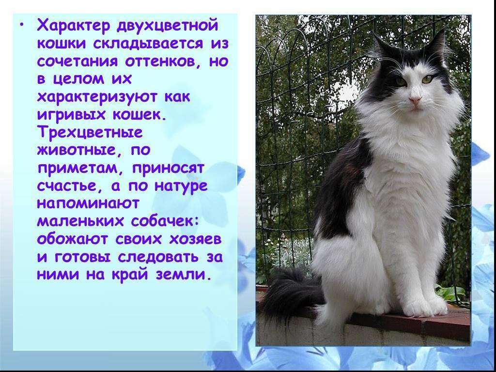 Белая кошка пришла в дом: приметы и поверья